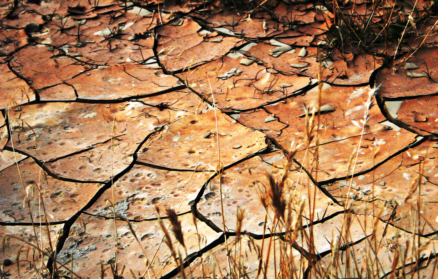 Short essay on drought