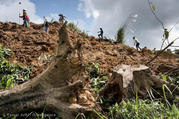 Forest destruction to give way to mines in one of the world's last remaining ancient forests in Indonesia